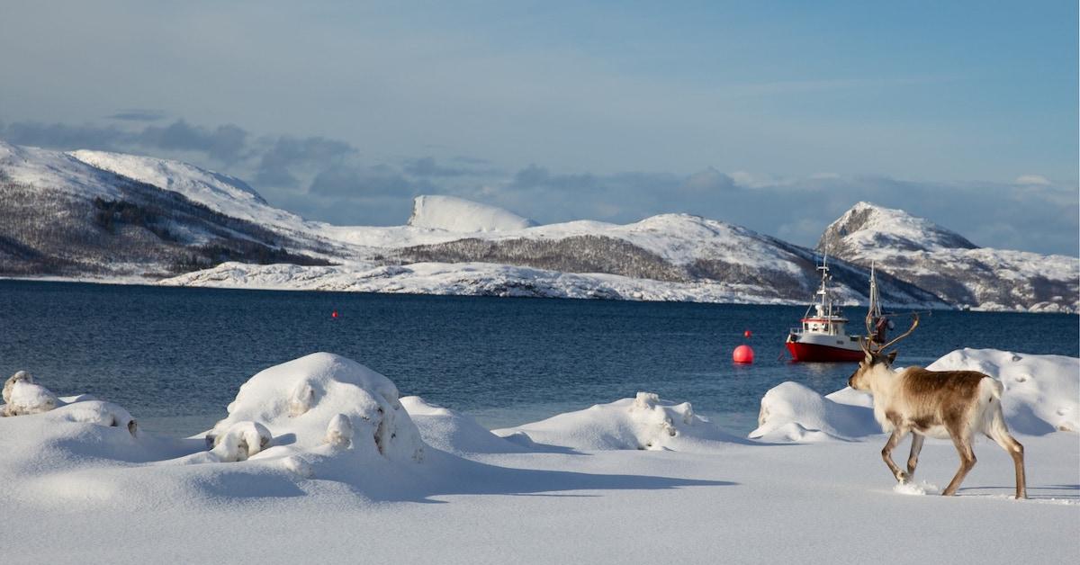 Norveška vodi na poti v trajnostno prihodnost
