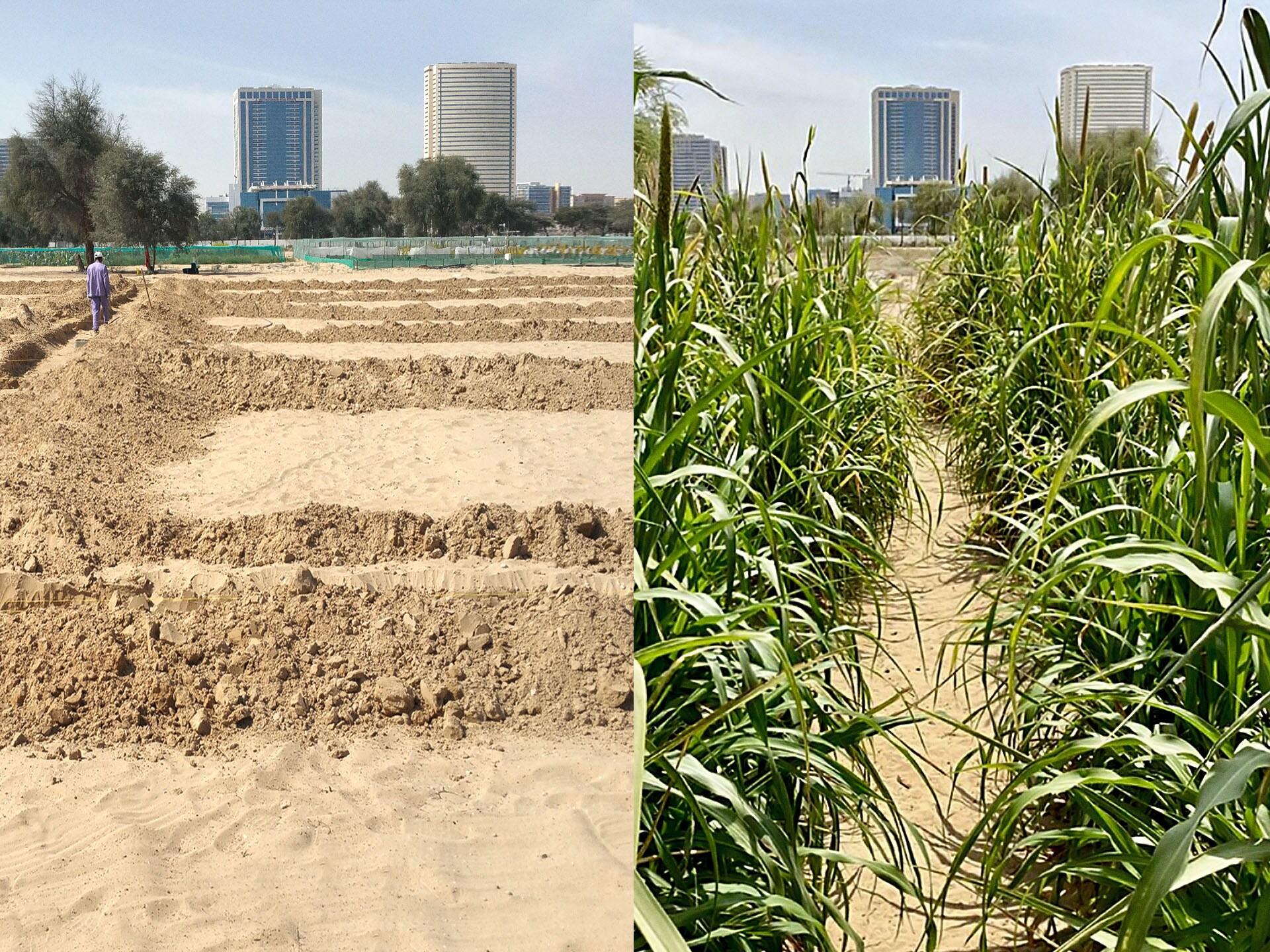 Liquid NanoClay je ime postopka, ki naravno glino pretvori v tekočino za sanacijo tal. Ta tekočina lahko obrne proces, ki tla spreminja v puščavo, sanira razgrajena tla in zmanjša porabo vode v zelenih ekosistemih.