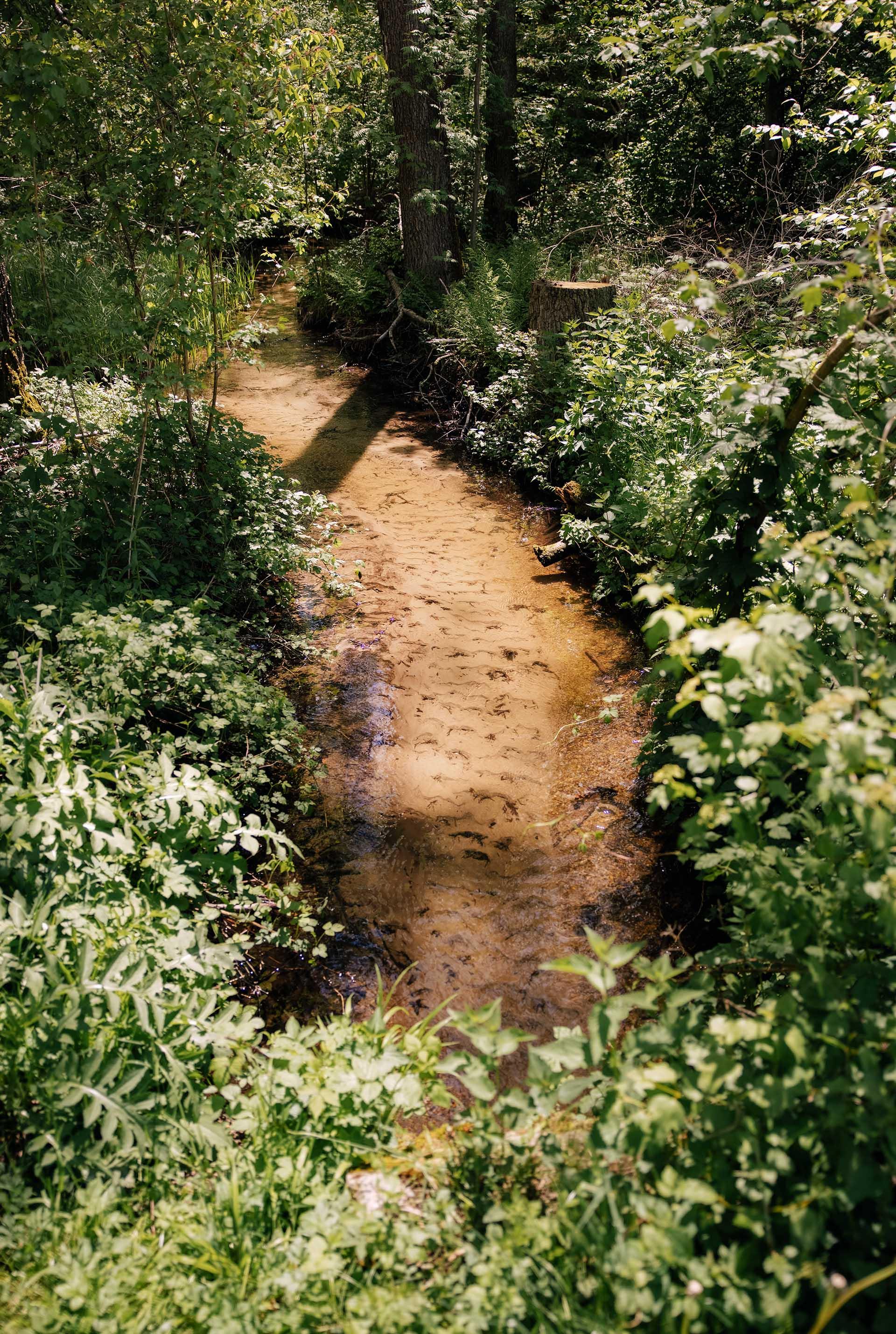Potok z gosto poraslim bregom.